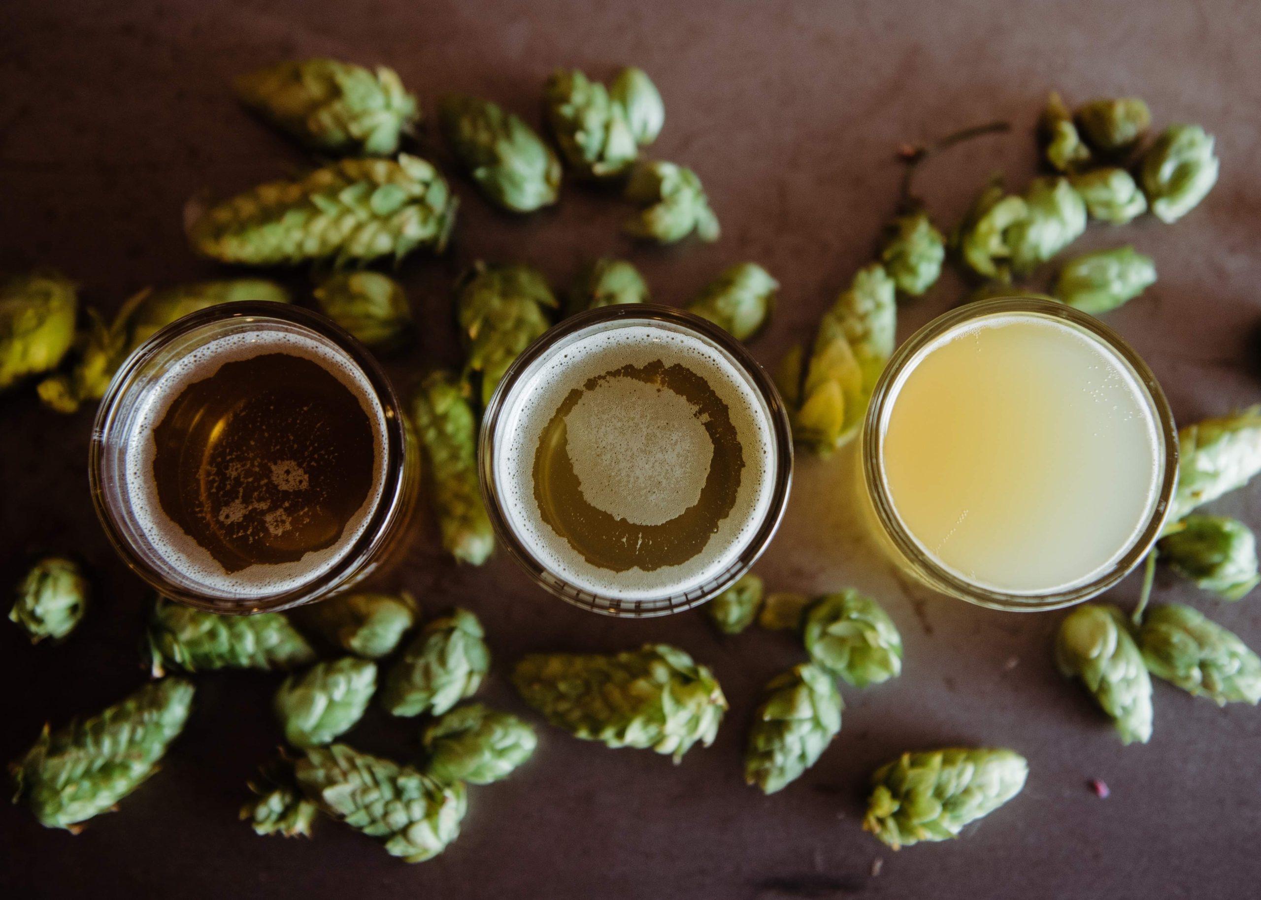 Verre de bière et houblon pour un brassage de bière lors d'un EVG