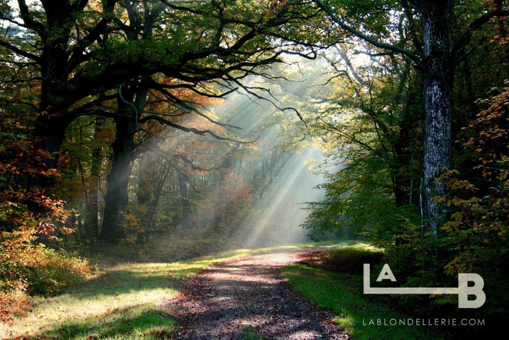forêt de Sologne dans le domaine de la Blondellerie